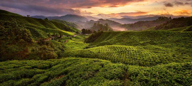 Pourquoi visiter les Cameron Highlands à Pahang en Malaisie occidentale